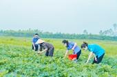 Kiểm sát viên hỗ trợ nông dân giữa mùa dịch ở Bắc Giang
