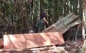 Khởi tố vụ phá rừng quy mô lớn tại Gia Lai