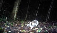Phát hiện bất ngờ về loài động vật nguy cơ tuyệt chủng gần Đà Lạt