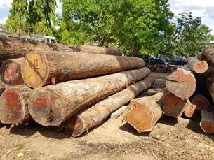 """Cục THADS Đắk Lắk lý giải vụ """"thất lạc"""" gỗ tang vật"""