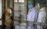 Bác sĩ thú y tử vong sau khi mắc bệnh hiếm gặp do nhiễm virus Monkey B từ khỉ