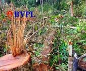 Kiểm sát khám nghiệm hiện trường vụ phá rừng quy mô lớn ở Đắk Nông