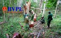 Cận cảnh cả đoàn lâm tặc rầm rộ vào khu bảo tồn để  phá rừng