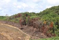 Yêu cầu xử lí tình trạng phá rừng chiếm đất trong khu vực di tích lịch sử quốc gia