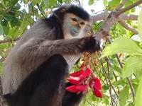 Việt Nam có thêm 2 địa điểm được công nhận là khu dự trữ sinh quyển thế giới