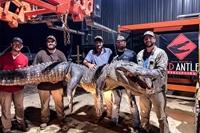 Khám phá cổ vật nghìn năm trong dạ dày cá sấu