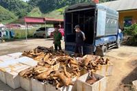 Phát hiện, thu giữ trên 1 tấn sản phẩm động vật bốc mùi