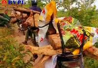 Vụ lâm tặc rầm rộ vào khu bảo tồn phá rừng Đắk Lắk đề nghị Gia Lai phối hợp ngăn chặn