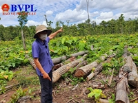 Phát hiện 27m3 gỗ lậu nằm la liệt tại Trung tâm Bảo tồn voi Đắk Lắk