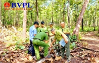 """Kiểm sát khám nghiệm hiện trường vụ """"gỗ lậu"""" tại Trung tâm Bảo tồn voi"""