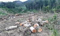 Yêu cầu khẩn trương xử lý 4 vụ phá rừng nổi cộm