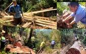 Khởi tố vụ án phá rừng nghiêm trọng tại huyện Bắc Trà My để tiến hành điều tra