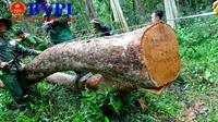 """Vì sao rừng tại Khu Bảo tồn thiên nhiên Ea Sô liên tục bị """"lâm tặc"""" tàn phá"""