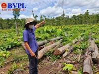 Khởi tố vụ án hình sự Vụ 27m3 gỗ lậu tại Trung tâm Bảo tồn voi