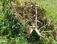 Truy tìm thủ phạm chặt phá tan hoang vườn sầu riêng của người dân