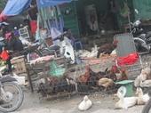 Gần Tết, lo mất an toàn vệ sinh thực phẩm ở chợ cóc, chợ tạm