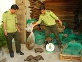 Bắt quả tang một vụ mua bán động vật hoang dã quý hiếm