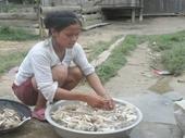 Ngộ độc do nấm độc ngày càng gia tăng