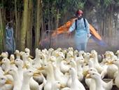 Hỗ trợ gia súc, gia cầm, thủy, hải sản bị thiên tai, dịch bệnh