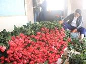 Cận lễ 20 11 hoa Đà Lạt đồng loạt tăng giá mạnh