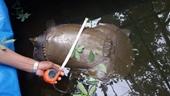 Bắt được con vật lạ nặng gần 25kg