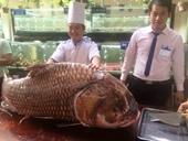 Cá hô khủng nặng 130 kg, ước tính giá khoảng nửa tỷ đồng