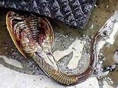 Phát hiện thủy quái 140 chân gây hoang mang