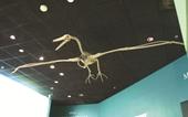 Tìm thấy hóa thạch chim khổng lồ 50 triệu tuổi